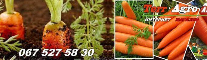 Bolezni-i-vrediteli-morkovi