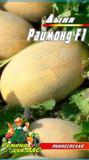 melon-Rajmond-F1