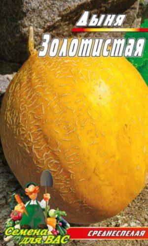 melon-Zolotistaya