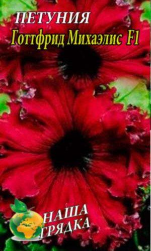 Petunia-Gottfrid-Mihaelis