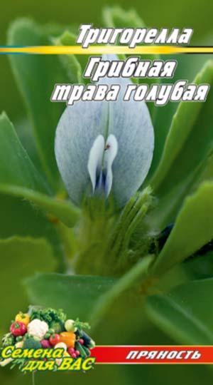 Gribnaya-trava-Trigorella-golubaya