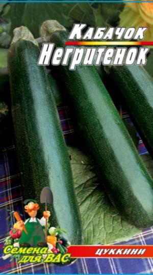 marrow squash-tsukkini-Negrityonok