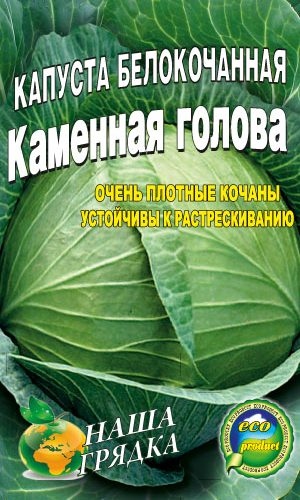 Cabbage-Kamennaya-golova
