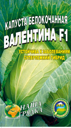 Cabbage-belokochannaya-Valentina