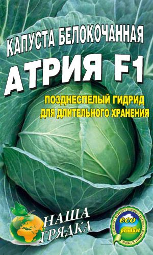 Cabbage-belokochannaya-sort-Atriya-F1