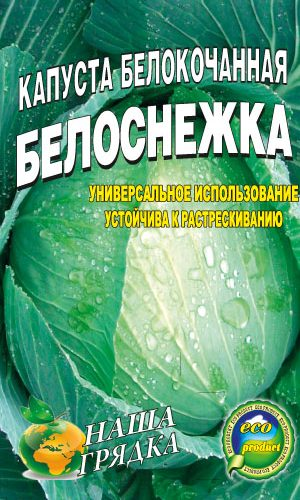 Cabbage-belokochannaya-sort-Belosnezhka