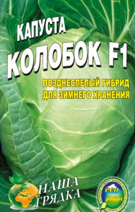 Cabbage-sort-Kolobok-F1
