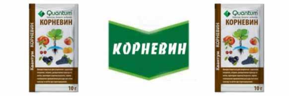 Kornevin-kupit-optom