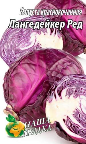 Red -cabbage-Langedeyker-Red-krasnokochannaya