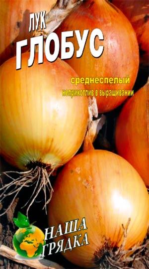 Onion-Globus-odnoletnyaya-kultura