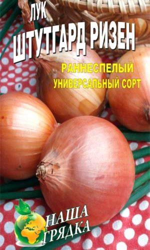 Onion-SHtutgarter-Rizen-odnoletniy-sort
