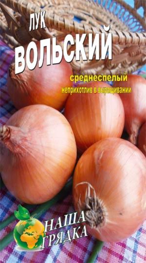 Onion-Volskiy-odnoletnyaya-kultura