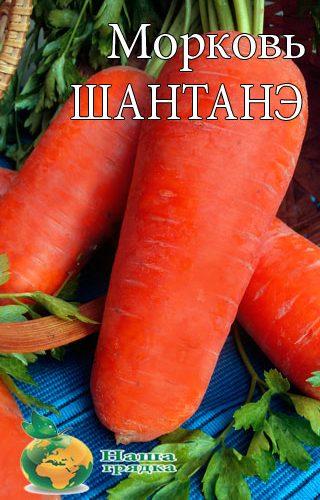 Carrot-SHantane