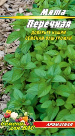 Spearmint-perechnaya