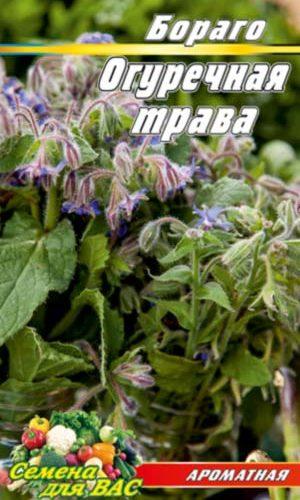 Cucumber-grass-Borago