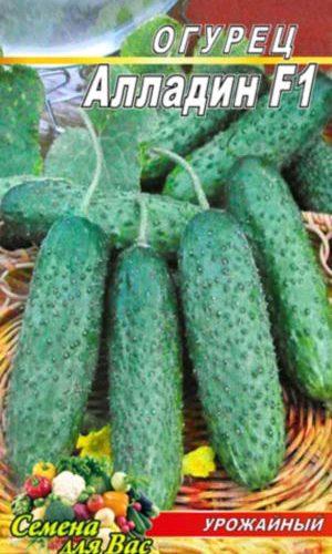 Cucumber-Alladin-F1