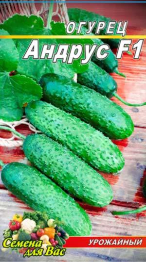 Cucumber-Andrus-F1