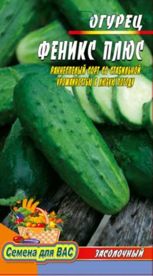 Cucumber-Feniks-plyus