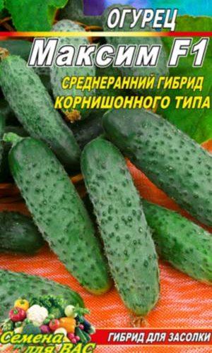 Cucumber-Maksim-F1