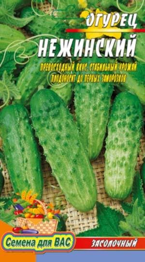 Cucumber-Nezhinskiy-12