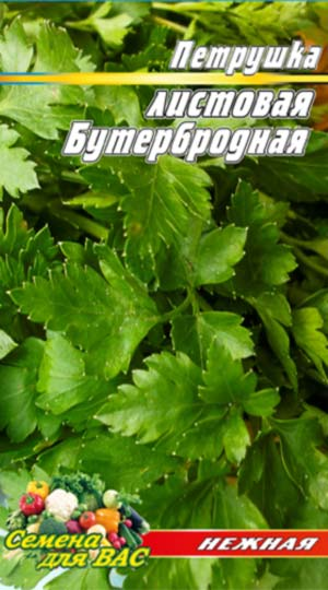 Parsley-listovaya-Buterbrodnaya
