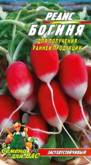 Овощи короткого и длинного светового дня, Интернет магазин семян 11