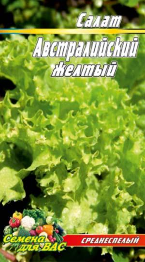 Salat-Avstraliyskiy-zhyoltyiy