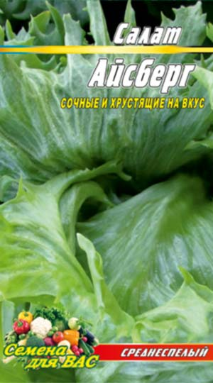 Salat-Aysberg