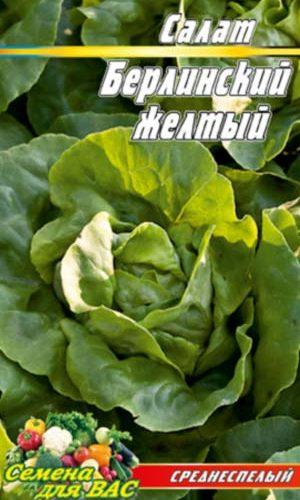 Salat-Berlinskiy-zhyoltyiy