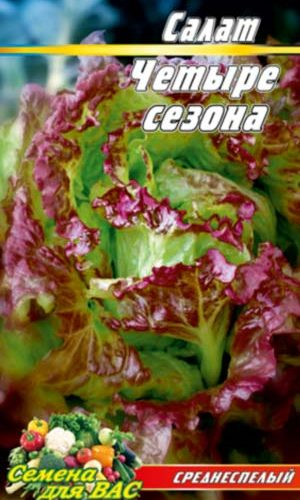 Salat-CHetyire-sezona