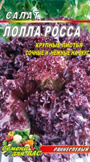 Salat-Lollo-Rossa