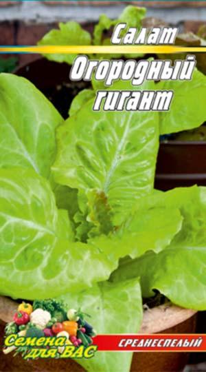Salat-Ogorodnyiy-gigant