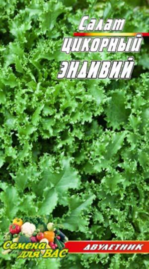 TSikornyj-Salat-Endivij