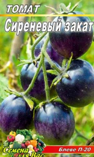 Tomato-Bleve-P-20-sirenevyiy-zakat