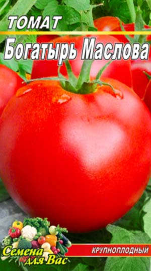 Tomato-Bogatyir-Maslova
