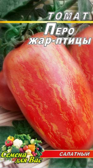 Tomato-Pero-ZHar-ptitsyi