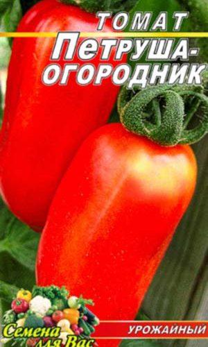 Tomato-Petrusha-ogorodnik