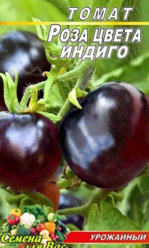 Tomato-Roza-tsveta-indigo
