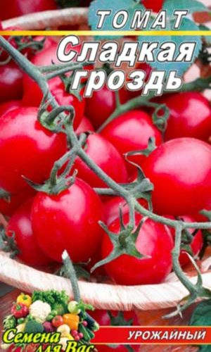 Tomato-Sladkaya-grozd