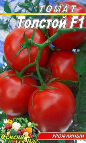 Tomato-Tolstoy-F1