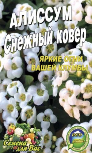 alissum-snezhnyiy-kover