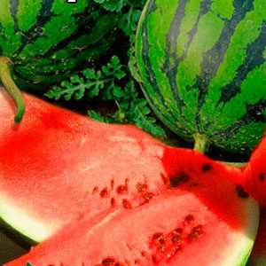 Watermelon-Borchanskiy