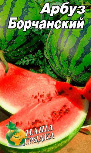 Watermelon-Borchanskiy