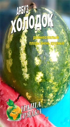 Watermelon-holodok