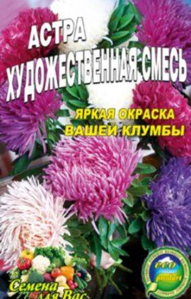 Aster-hudozhestvennaya-smes