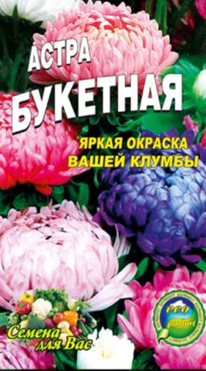 Aster-pionovidnaya-buketnaya-smes