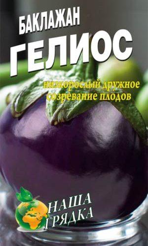 Eggplant-gelios