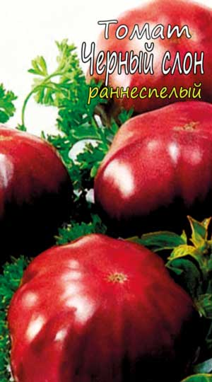 tomato-chernyiy-slon