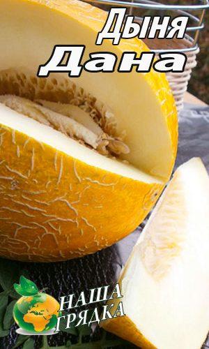 Melon-dana