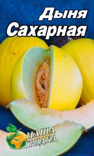 Melon-saharnaya300h540